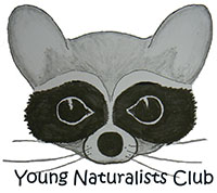 logo_YoungNaturalists