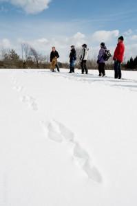 Hare tracks, 2015