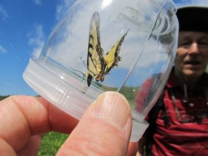 Chris Rickard and a Canadian Tiger Swallowtail Butterfly (photo by John Dickson)