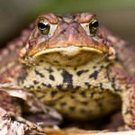 Our Toad houses will put a smile on any American Toad. Maybe??? (Photo By Brian Robin)