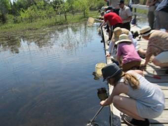 Pond study workshop (Photo by John Dickson)