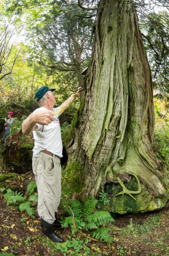 Bob Knapp measuring a really old cedar tree. (Photo by Brian Robin)
