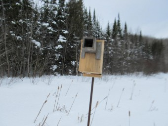 Newly constructed and installed nesting box for waterfowl (Photo by John Dickson)