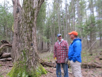One of two Heritage Maple trees that were mature specimens during the later 1800's. Richard Bentham and John Burton look on. photo by John Dickson